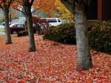 Linfield Fall 2