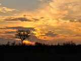 sunrise in Kruger park