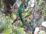 Birding Chiapas, Mexico (2009)