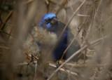TX Birding Trip  Jan' 05