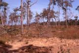 12-Jungle area next to K9 training yard