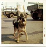 Barking dog, Udorn 71