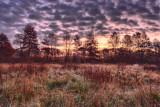 Sunrise in the Woods *.jpg