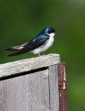 Little Birdie *.jpg