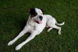 Hound Dog.jpg