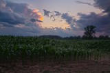 Corn-Field-Sunset.jpg