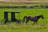 Horse n Buggy.jpg