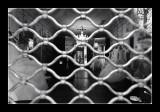 Derriere la grille .... (EPO_6319)