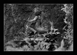 Cupidon - Versailles (DSC5377_b&w)