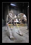 Giant cat skeleton by Dan halen - Tate Modern (EPO_7001)