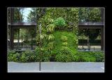 Mur végétal conçu par Patrick Blanc - Paris