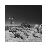 Palm Springs / Joshua Tree