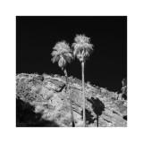 Palm Springs #4
