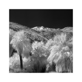 Palm Springs #12