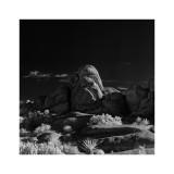 Joshua Tree Rocks Sq