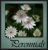 Perennials @ Rick's Custom Nursery