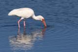 Florida Bird Photography, Jan 2009