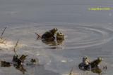 Amfibien en Reptielen / Amfibians and Reptiles