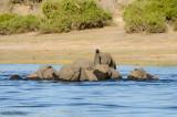 Crossing The Chobe River