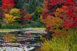 autumn at the pond