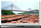 Tsing-Ma Bridge 青馬橋