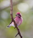 Photos from 2009 Great Backyard Bird Count