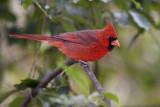More 2009 Great Backyard Bird Count photos