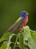 Cover shot for Arkansas Audubon Society's brochure.