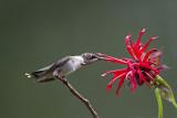 SOME OF MY FAVORITE BIRD PHOTOS