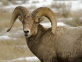 sheep_9999_23.jpg