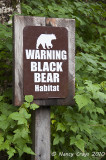 Entering Ketchikan Black Bear Habitat