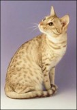 4th gen : IC BC Katz Ahinahina Of HalifaxOCI os24