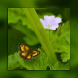 Butterfly on green (5030)