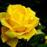 Bloomin' lovely! (10534)