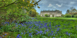 Stourhead House and bluebells, Wiltshire