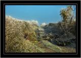 Frosty farm track, near Martock