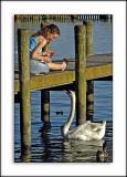Feeding the swan, Ambleside, Cumbria