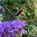 Red Admiral prepares for lift off!