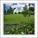 White house and roses, near Windermere, Cumbria