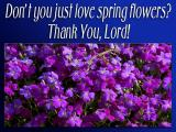 'Don't you just love…?' slide from the Spring flowers series