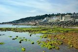 Rocks and weed, Lyme Regis