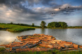 Logs and lake, near Halstock