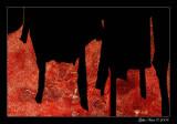 Venise est rouge et noire