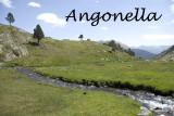 angonella