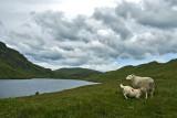 Ben Lawers - Lochan Na Lairige
