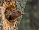 _JFF3323 Flicker Stretched Out.jpg
