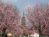 Comme le printemps sied magnifiquement à notre beau village !
