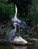 Florida Birds Everglades and Deering Rookery