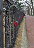 Festive fence