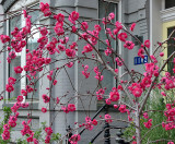 The fleeting face of spring in Washington